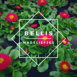 Bellis (madeliefjes)