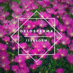 Delosperma/ijsbloemen